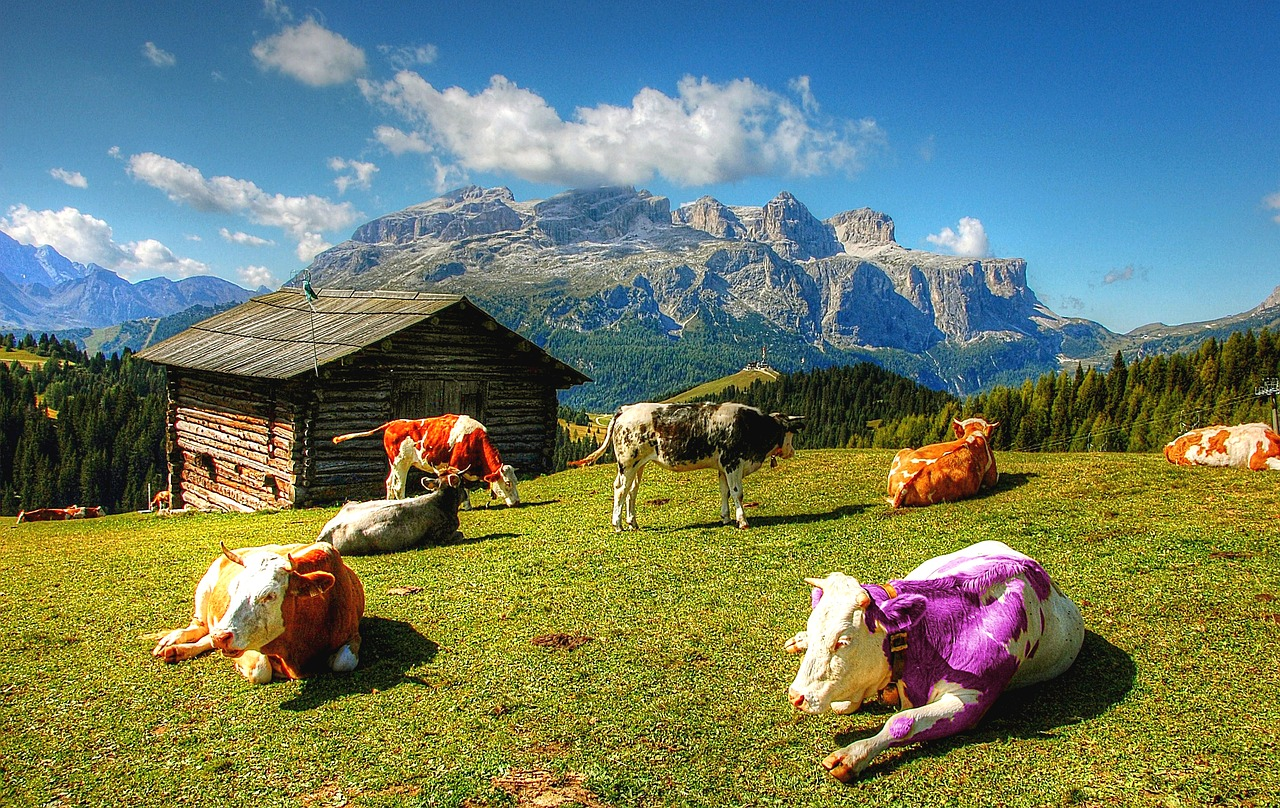 What Purple Cows Taught Me about my Freelance Writing Business